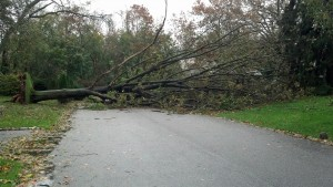 Downed Tree Across Street in Long Island, NY